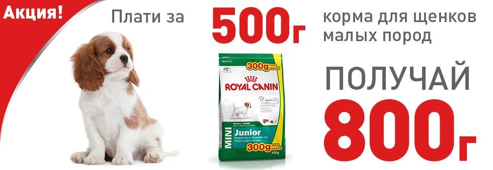 Купить корм Royal Canin для кошек в интернет-магазине